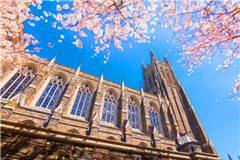 杜克大学世界排名