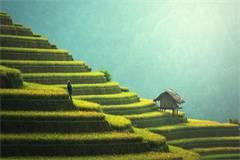 英国农业,林业与食品业专业排名(2021年卫报农业,林业与食品业专业英国大学排名)