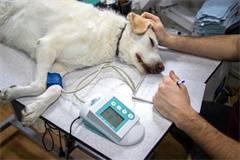 新加坡兽医学排名及硕士申请条件(附2019年ARWU兽医学世界排名榜单)