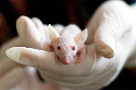 美国生物医学/生物工程排名及硕士申请条件(附2018年USNEWS生物医学/生物工程美国大学排名榜单)